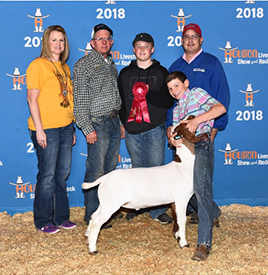 Harbour Livestock | Meat Goat Winners