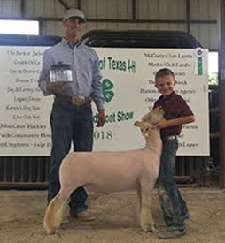 Harbour Livestock | Southdown Winners